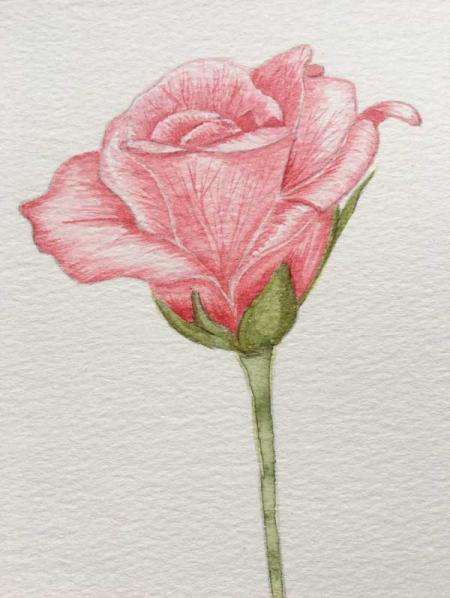 Single-rose