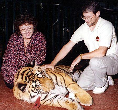 Tiger 8 red