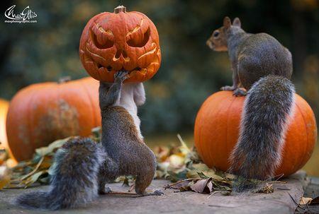 Squirrel-steals-carved-pumpkin-max-ellis-1