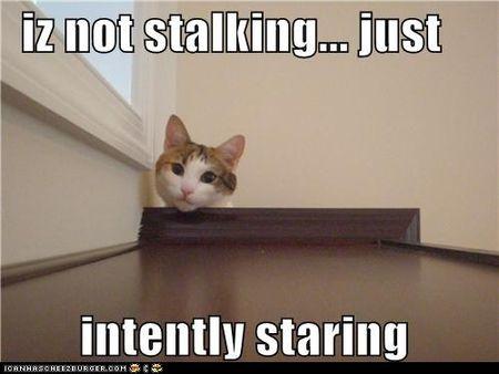 Not stalking