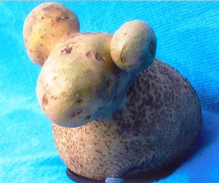 Unusual-shape-fruit-vegetables-22__605
