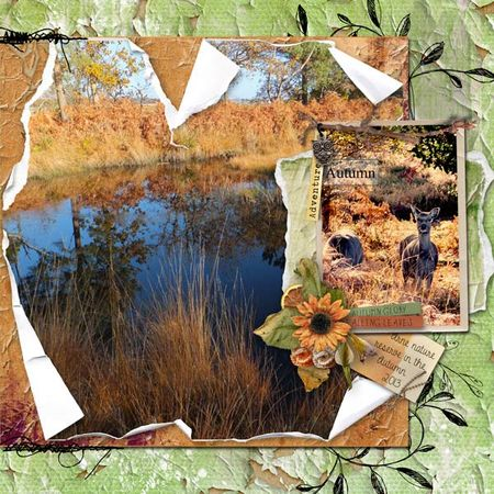 Arne-autumn