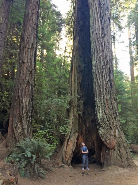 8 redwood inside 2