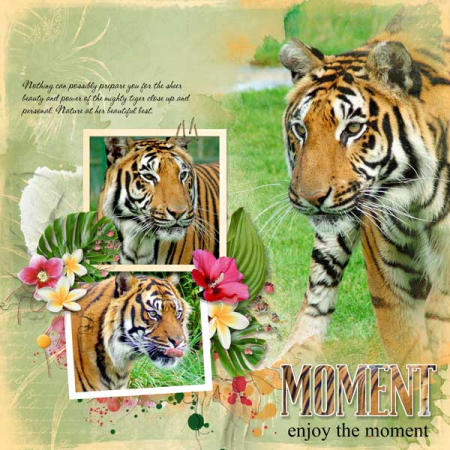 Nu tropical-tiger