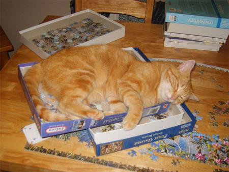 Funny-cats-destroying-puzzles-36-5e94112aa4268__700