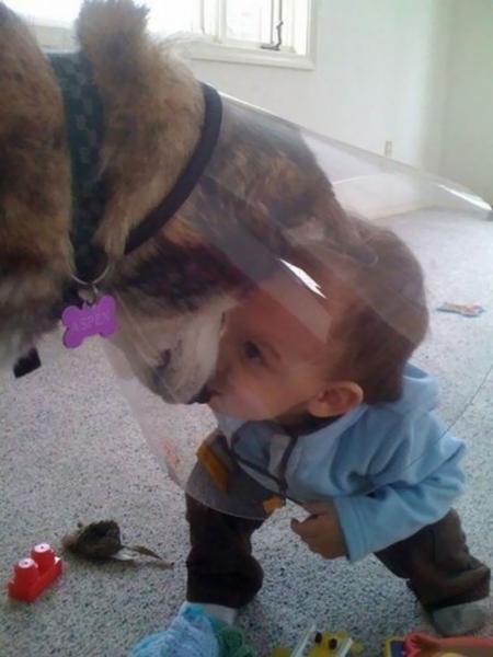 Funny-pets-with-cones-15-5eda0834e27ae__700