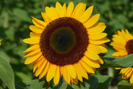 Flower close 8
