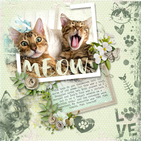 Meow yawn
