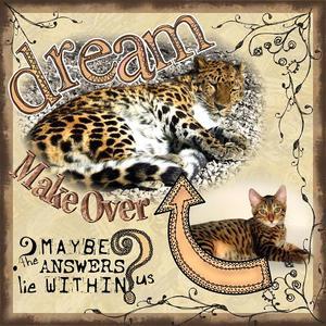Dream_makeover