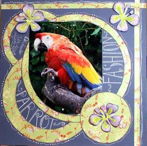 Parrot_fashion