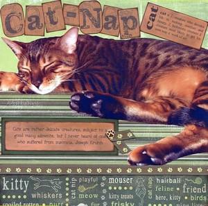 Cat_nap_a_all