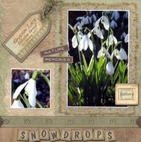 Snowdrops_dare_all
